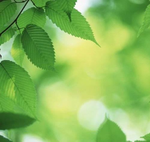 Текстура с листвой