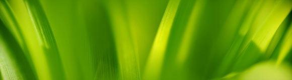 яркие зеленые обои