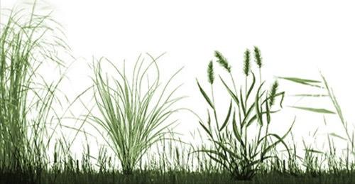 Кисти травы