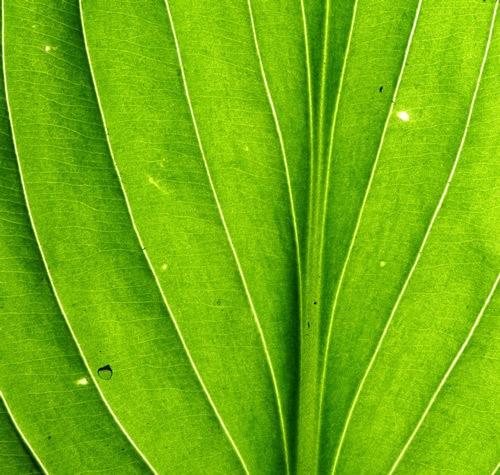 Фон из зеленого листа