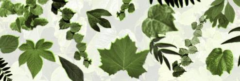 Кисти листвы