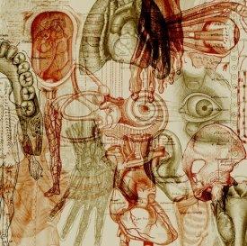 Анатомические кисти