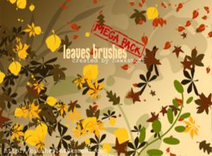 50 кистей листьев