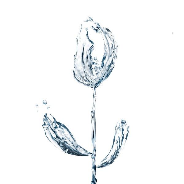 тюльпан из брызг