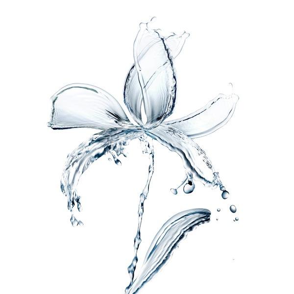 лилия из воды