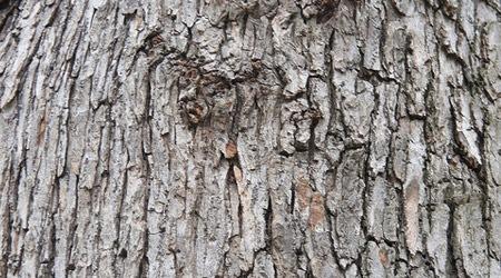Серая кора дерева