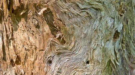 Волокнистая деревянная текстура