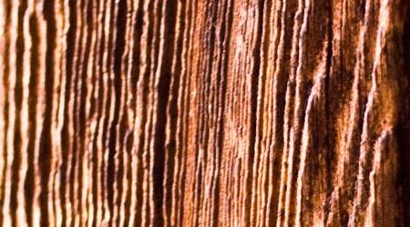 Ребристое дерево