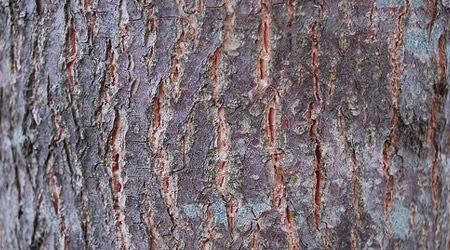 Дерево с прожилками