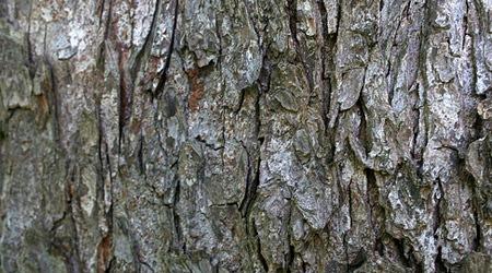 Серая деревянная кора