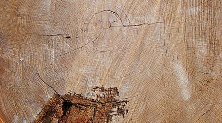 Текстура срезанного дерева
