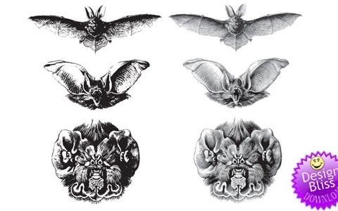 Векторные летучие мыши