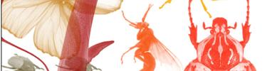Кисти насекомых в высоком разрешении