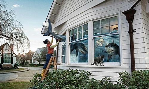 Акулы за окном