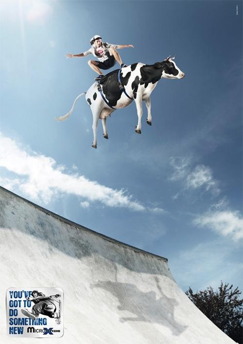 Катание на корове