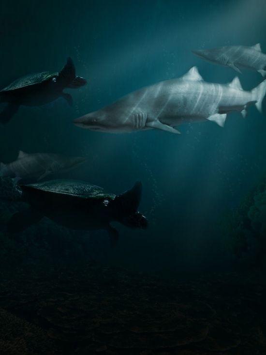Создайте редкие подводные изображения