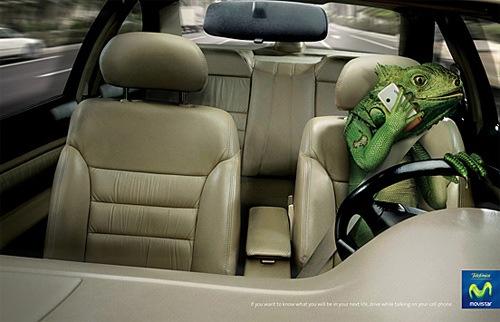 Игуана за рулем