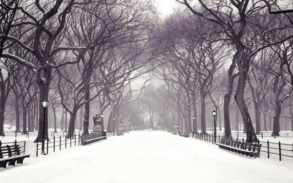 Двухтональные зимние обои