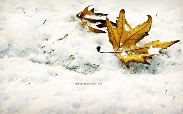 Зимний опавший лист