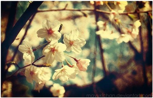 Винтажная Весна