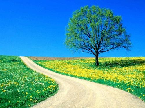 Весенняя цветущая дорога