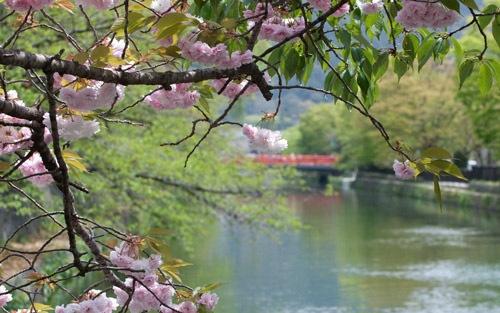 Весеннее фото