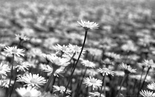 Черно-белая весна