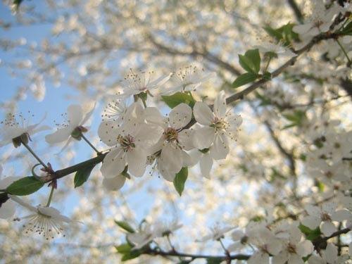 Это Весна