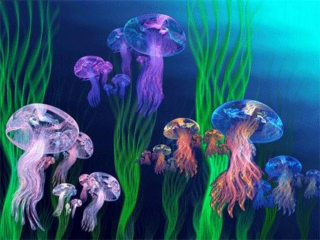 Медузы12-Apo-Jelly-Armada