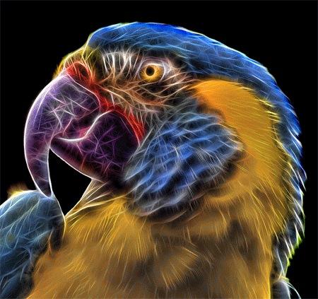 Фрактальный попугай