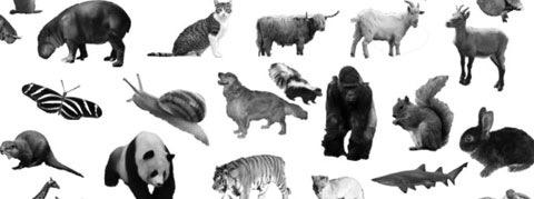 Кисти животных