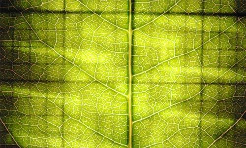Яркая зеленая текстура листа