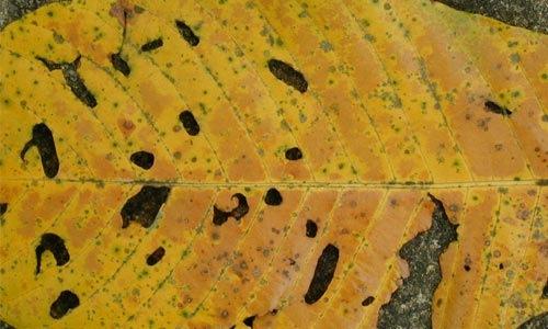 Дырявый лист
