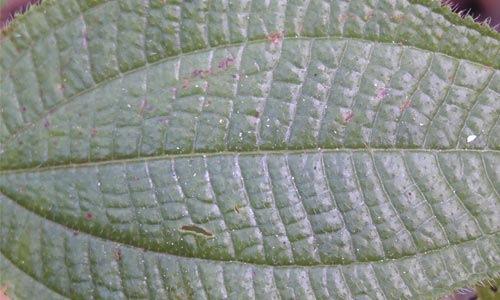 Блестящий плотный лист