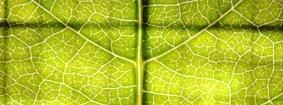текстуры-листвы