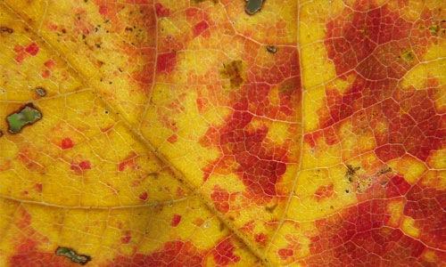 Разноцветный лист