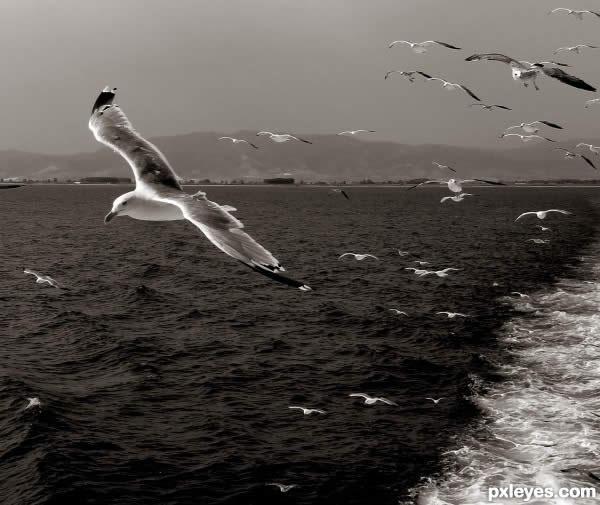 полет над морем