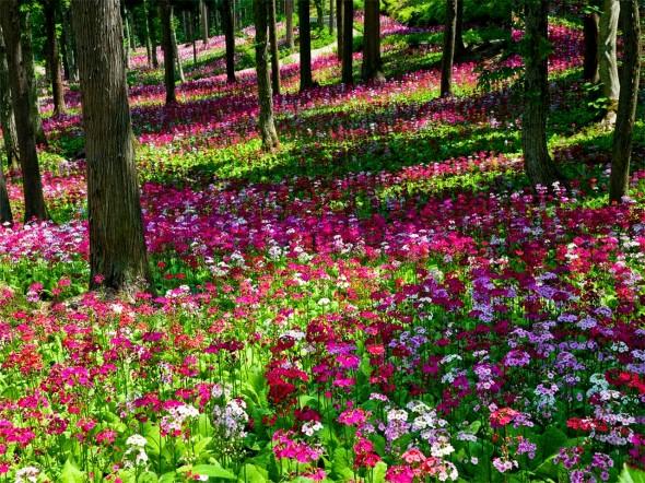 http://www.dejurka.ru/wp-content/uploads/2012/03/flower-carpet-DesktopNexus.com_-590x442.jpg