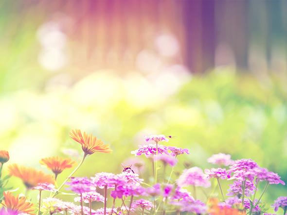 Весна... Пришел рассвет и миру улыбнулся... Spring-8
