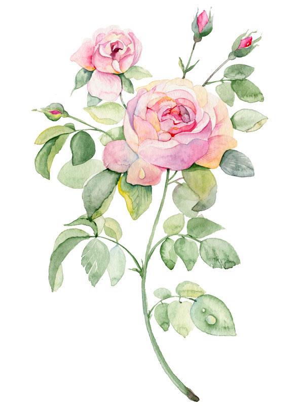 Цветок акварелью рисунок