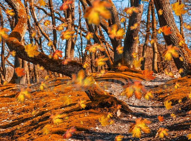 autumn falling leaves photoshop